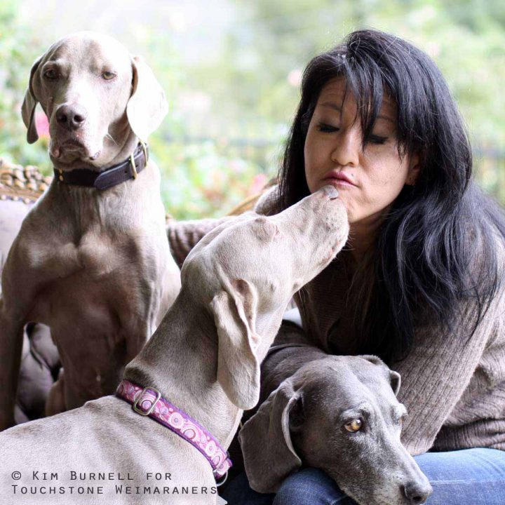 About Touchstone Weimaraners