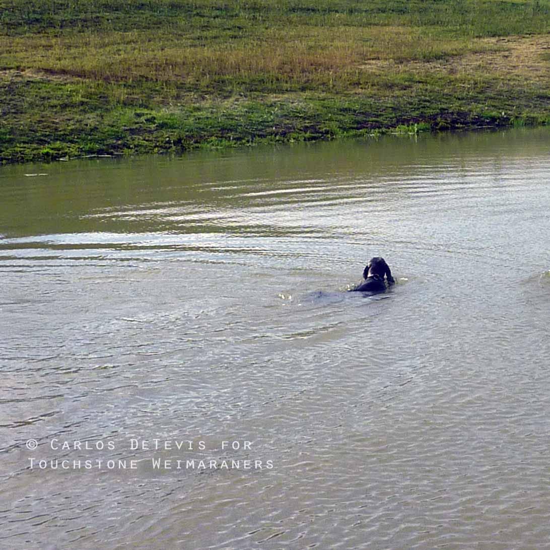 Touchstone's Blue Bayou Rylee Swimming