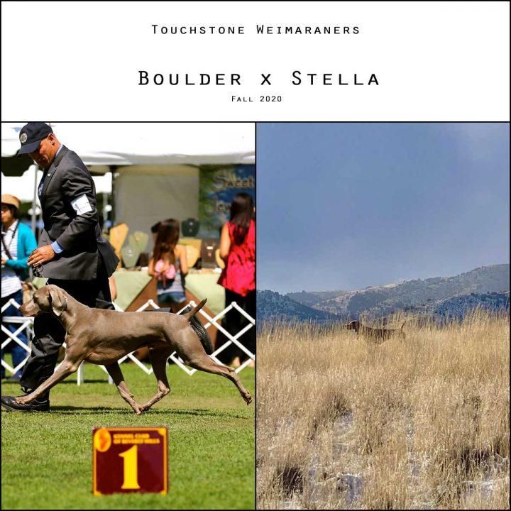 Boulder x Stella Litter