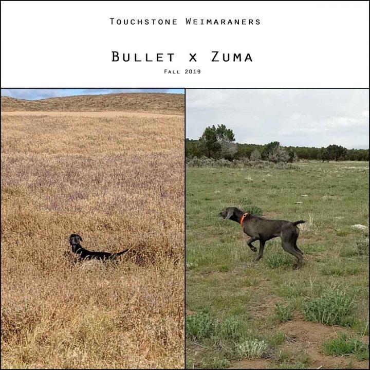 Bullet x Zuma