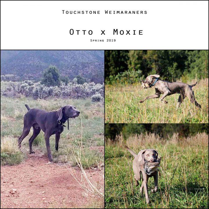 Otto x Moxie