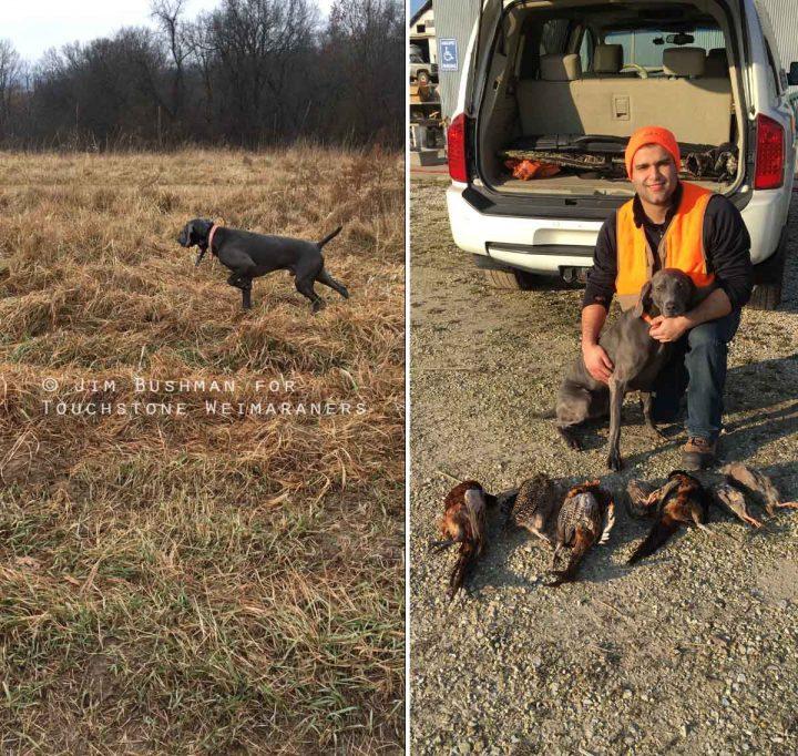 Touchstone's Mojo Rising Pheasant Hunt