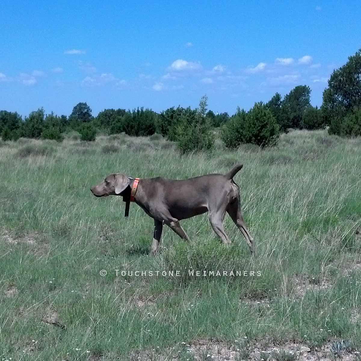 Westend's Outdoor Pocket Rocket in Arizona