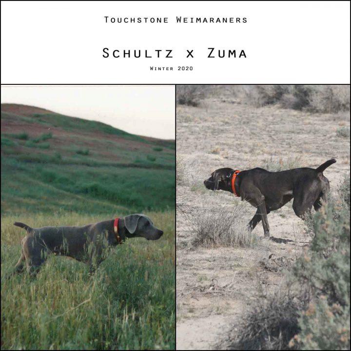 Schultz-x-Zuma Litter
