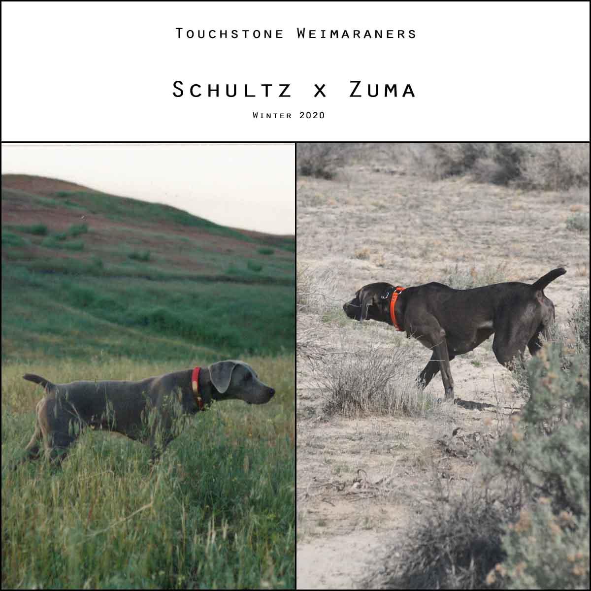 Schultz x Zuma Litter