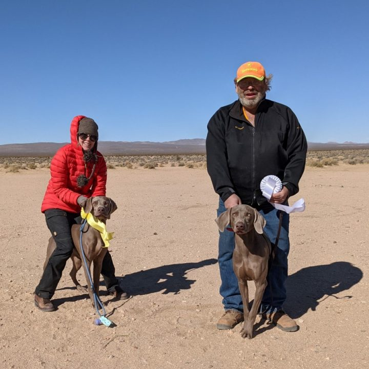 Touchstone pups place in field trial